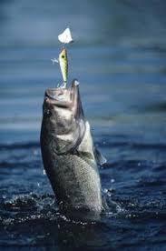 b fishing wallpaper for iphone