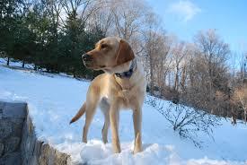 The Canine Fence Company Becomes Canine Company