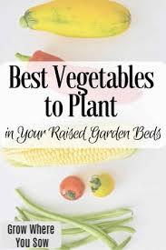 best vegetables for raised garden beds