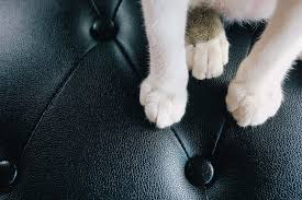 how to protect leather furniture from pets