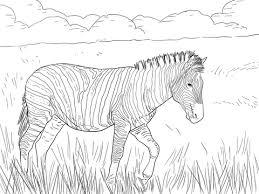Burchell S Gewone Zebra Kleurplaat Gratis Kleurplaten Printen