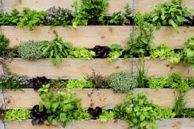 Grow Up Why A Vertical Garden Could Be The Answer For You Looklocalwa