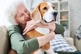 top 8 dog breeds for seniors
