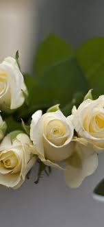 white roses hazy 1242x2688 iphone 11