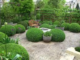 deer resistant elegant evergreen shrubs