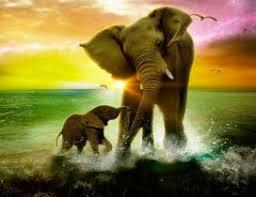 elephant hd desktop mobile wallpapers