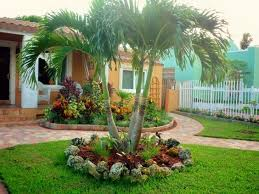 decorate your landscape with palm trees