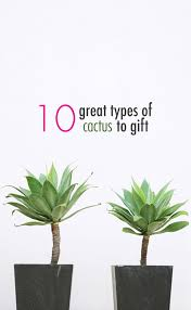 10 great types of cactus to gift a