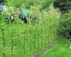 Buy Living Willow Fedge Screen