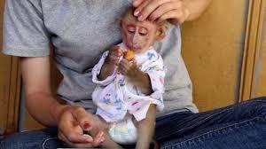 wow adorable monkey baby monkey