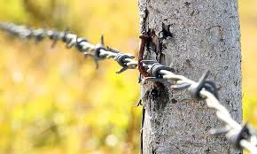 Barbed Wire Pasture Fence Barrier Rod Pile Lock Up Wire Barb Nail A Rusty Rust Pikist