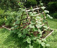 25 awesome garden trellis ideas green