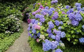 flower beautiful garden wallpapers hd