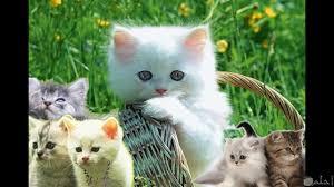 10 صور قطط جميلة جدا كيوت لأروع خلفيات الهاتف