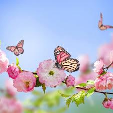 free wallpaper flowers and erflies