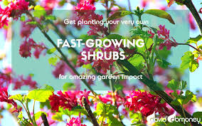 fast growing shrubs for instant garden