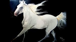 أجمل صور الخيول العربية الخيول العربية الاصيلة اجمل حصان