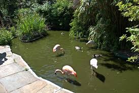 beenthere donethat flamingos and ducks