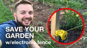 How I Saved My Garden From My Vicious Chickens With A Small Electric Fence Youtube