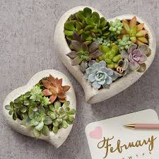 this heart shaped succulent garden is