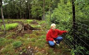 Low Cost Fence Designs To Limit Deer Impacts In Woodlands And Sugarbushes Cornell Small Farms