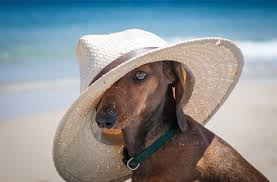 Beat the Texas Heat: Dog Days of Summer are Here - Hunt Regional ...