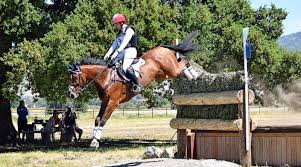Cross-country fall claims life of second horse at Bromont Horse ...