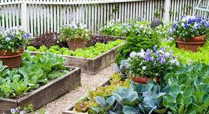 how to start a vegetable garden from