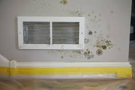 DIY DANGER: BLACK MOLD CLEAN UP