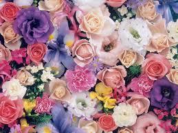 صور ورد ملونة تشكيلة صور زهور في منتها الجمال كلام حب