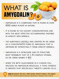 apricot kernels for cancer the real story