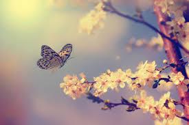 تقرير عن الفراشات موسوعة
