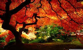 fall wallpaper hd widescreen amazing