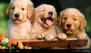 puppies live wallpaper 1 0 apk