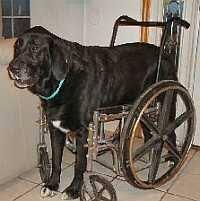 homemade dog wheel chair designs