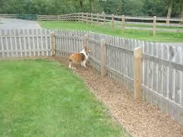 Pea Gravel Along Fence Doe Dog Trail Solution In Dog Run Dog Backyard Dog Yard Landscaping Dog Friendly Backyard