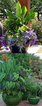gardens containers ideas for beautiful