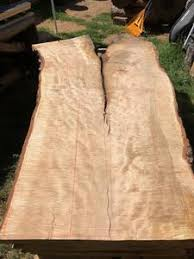 Live Edge Slabs Curly Silver Maple Live Edge Tables From Boise Trees Urban Forestry Products