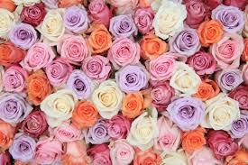 pastel roses pastel colours wallpaper