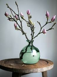 magnolia-tak, voorjaarsboeier Grillige, bemoste takken met grote ...