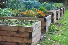 best height for raised garden bed you