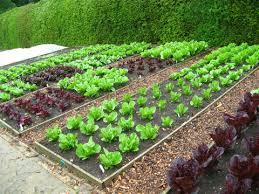 kill weeds in vegetables gardens get
