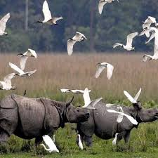 Kaziranga National Park -Assam