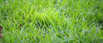 crabgrass and prevent it