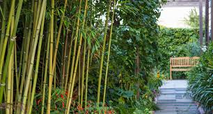 10 diffe types of bamboo better