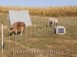 Select The Best Electric Fence Design For Your Hogs Pigs Premier1supplies