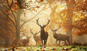 The autumn is the most beautiful time of the year | Nature | News | Express.co.uk