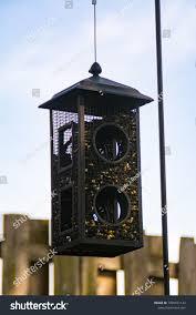 Single Metal Bird Feeder Hanging On Stock Photo Edit Now 1095871142
