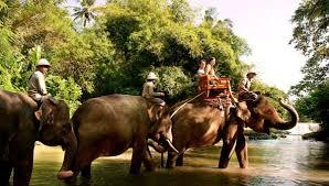 انشطة سياحية يمكن القيام بها في حديقة حيوانات بالي