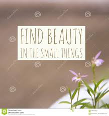 inspirational motivational quote `find beauty in the small things